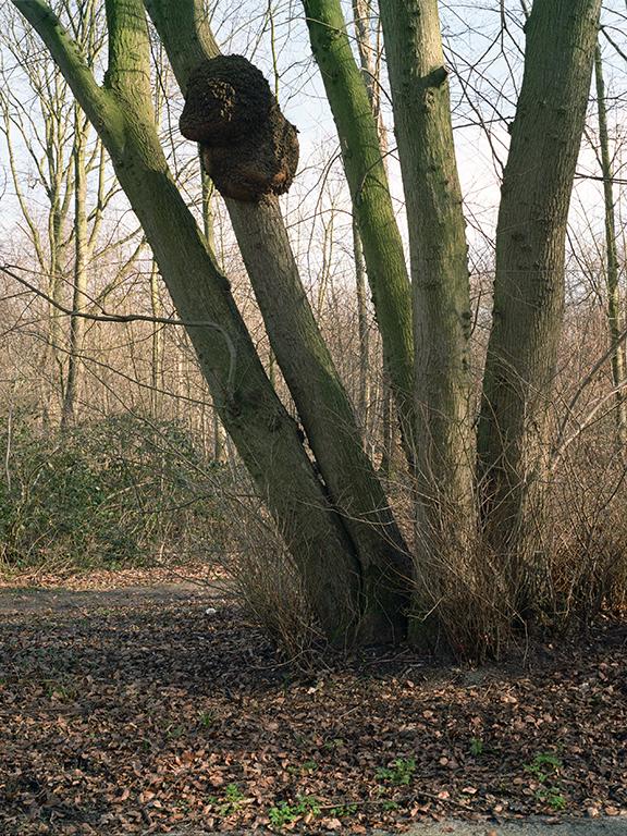 Sick Trees